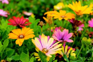 Brightly colored flowers.